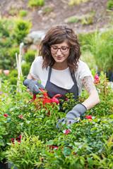 Lächelnde Gärtnerin beim gießen der roten Rosen in der Gärtnerei