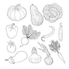green vegetable.  illustration