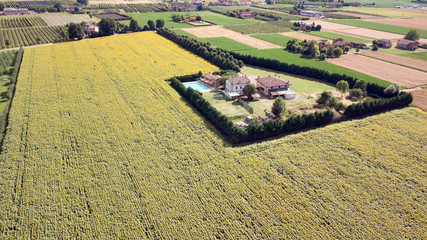 Sunflower farm in Tuscany, Italy