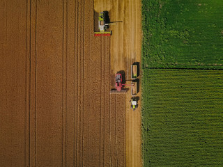 Fototapete - Agriculture in action