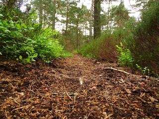Forest Of Glen Tanar
