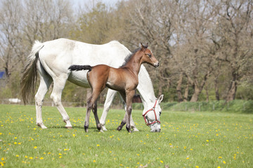 Mare and foal pasture