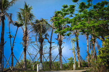 row of palms along the road