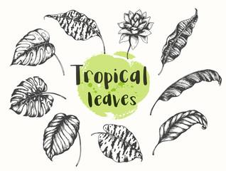 Summer tropical floral design elements.