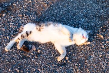 street cat on the gravel platform
