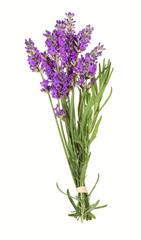 Lavendelblüten, lavender
