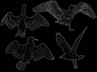 four seagulls sketches on black background