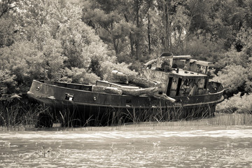 Old boat on the Tigre river Delta. Buenos Aires