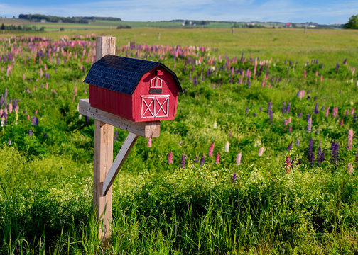 Mailbox amid a field of wild lupins in rural Prince Edward Island, Canada.
