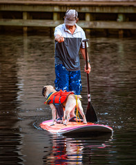 Paddle With The Dog