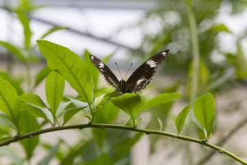 Butterfly Resting on Plant Branch