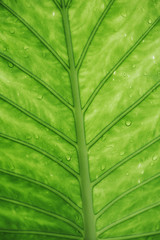 Green leaf background. Ecology concept.
