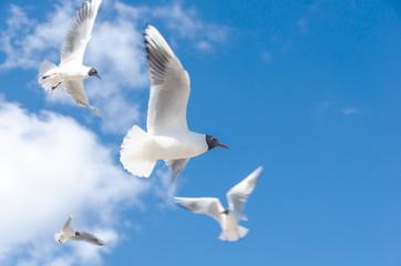 Möwen fliegend auf Himmel