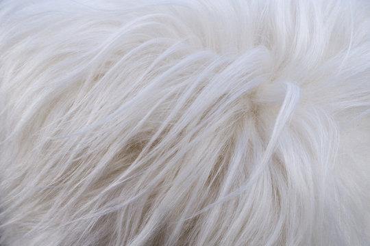furry white shaggy backdrop texture