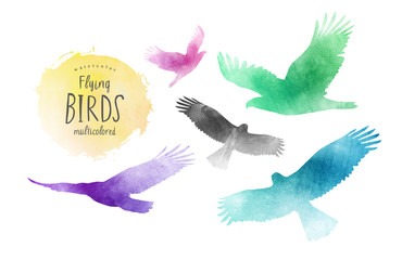 watercolor illustration of flying birds, set of eagles on isolated white background