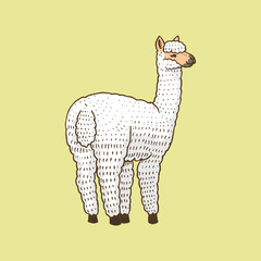 Cute Alpaca Llamas or wild guanaco on the background of Funny smiling animals in Peru for card poster invitation t-shirt. Hand drawn Elements. Engraved sketch.