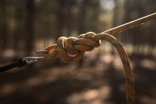 Tied hammock strap in forest