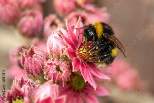 Bumble bee profile