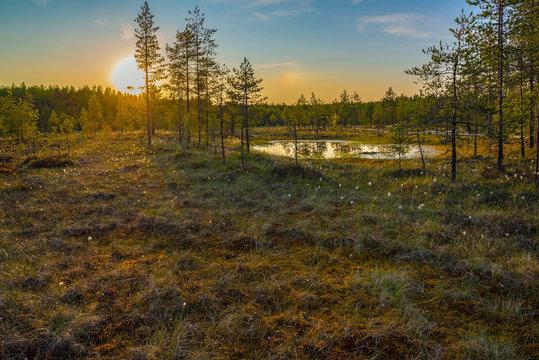 Colorful summer evening sunset in Finnish bog landscape