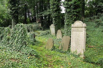 some headstones covered with ivy on the old jewish cemetery in Cieszyn, Poland, June 23, 2018