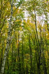 kkp trees