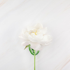 White peony flowers on marble background