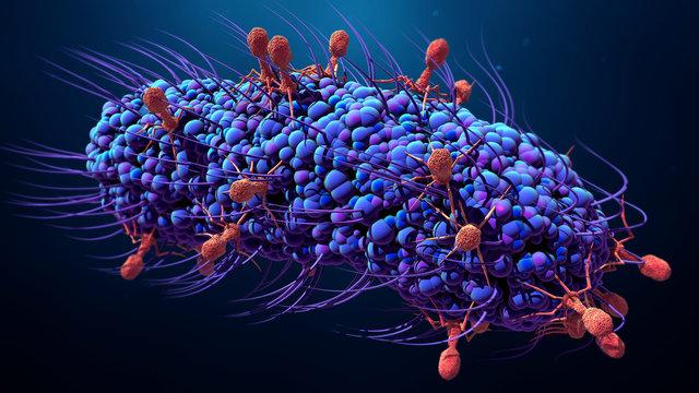 Bacteriophage infecting bacterium