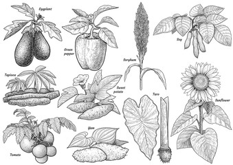 Cultivated plants collection illustration, drawing, engraving, ink, line art, vector