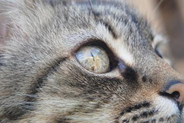 Macro de gato pardo