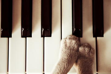 Cats paws lying on the piano keys close up cat playing