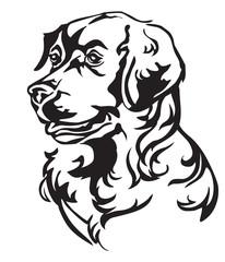 Decorative portrait of Dog Golden Retriever vector illustration