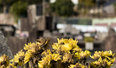 perception in the cemetery, flowers and crosses