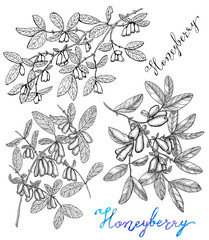 Monochrome graphic set with honeysuckle berries on branches with lettering isolated on white. Vintage nature concept, hand drawn botanical illustration with watercolor design elements