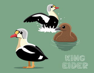 King Eider Cartoon Vector Illustration