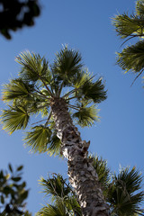Low angle of a palm tree at the beach