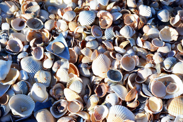 Beautiful seashells on the sea