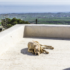 Dog on the big balcony