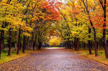 Wall Mural - Colorful foliage in autumn park. Autumn seasons.
