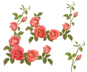 Set branches roses, bouquets with pink, red flowers, buds, green stems, leaves on white background, hand draw sketch in engraving vintage style, frames for design, vector