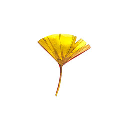 Autumn leaf - Ginko. Autumn maple leaf isolated on a white background. Watercolor illustration.