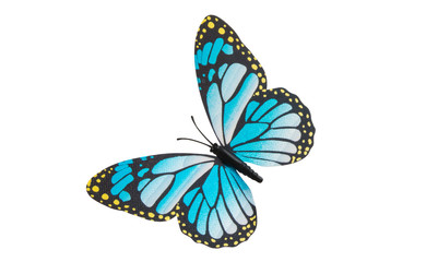 butterfly isolated