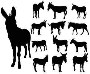 vector, isolated, set of donkey silhouettes