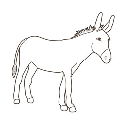 sketch of a donkey standing