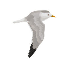 Seagull flying in the sky, gray and white sea bird vector Illustration on a white background