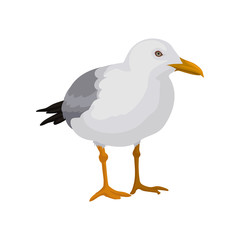 Seagull standing, gray and white sea bird vector Illustration on a white background
