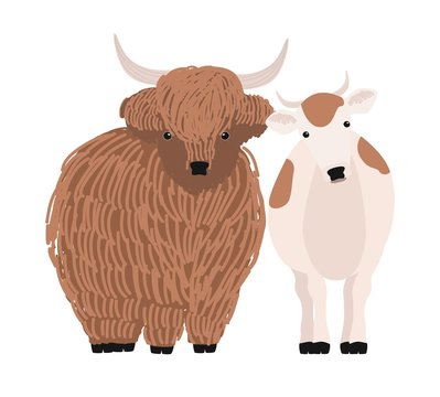Pair of yak and cow isolated on white background. Portrait of pair of cute cartoon domestic cattle animals standing together, farm livestock. Colorful hand drawn vector illustration in modern style.