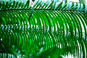 Natural green background of leaves.