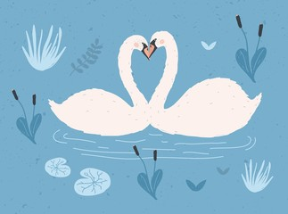 Couple of white swans floating together in water of pond or lake among plants. Pair of cute cartoon wild birds in love, waterfowl. Flat colorful hand drawn vector illustration in modern trendy style.