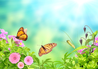 Summer frame with green leaves, flowers, caterpillar and butterflies