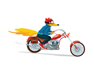 Fox man on a red motorcycle. Hand drawn illustration of dressed fox. Vector  illustration. Cartoon drawing style.